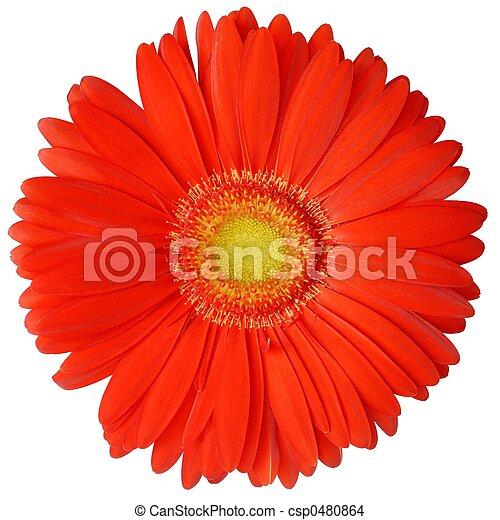 fleur - csp0480864