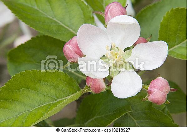 fleur - csp13218927