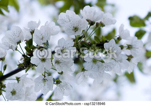 fleur - csp13218946