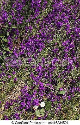 fleur - csp16234521