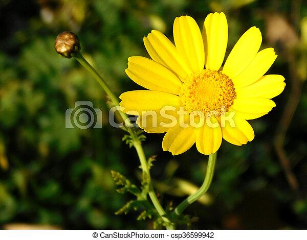 fleur - csp36599942