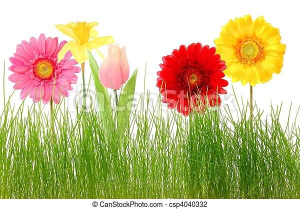 fleur - csp4040332
