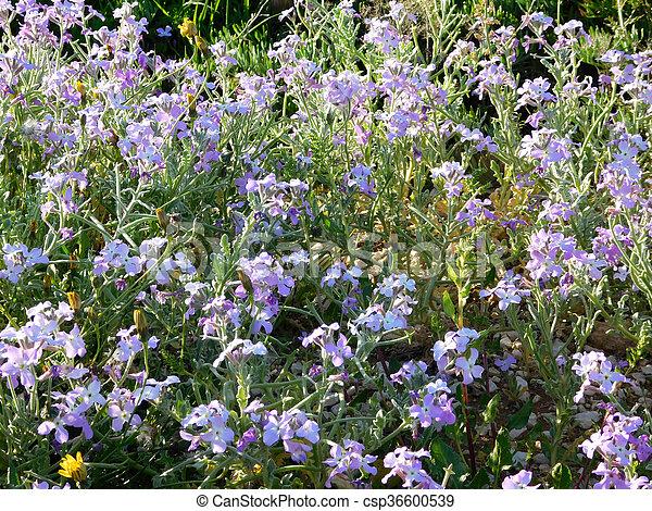 fleur - csp36600539