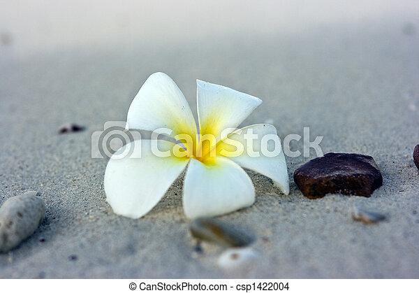 fleur, plage - csp1422004