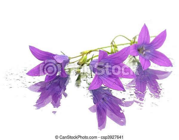 fleur pourpre - csp3927641