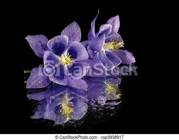 fleur, pourpre - csp3938917