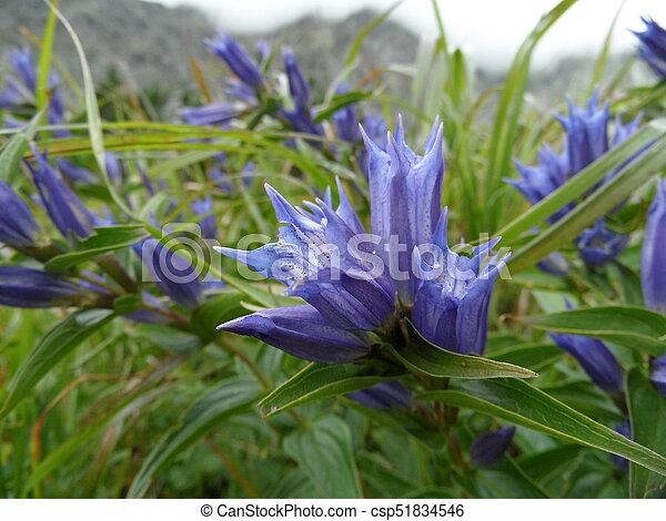 fleur pourpre - csp51834546