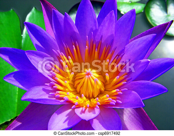 fleur pourpre - csp6917492