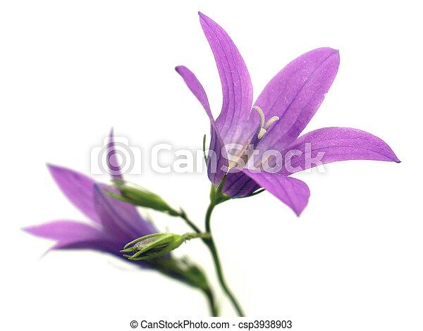 fleur pourpre - csp3938903