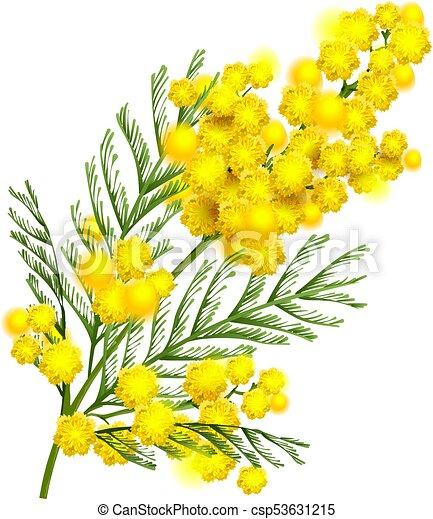 fleur printemps symbole jaune mimosa branche fleur clipart vectoris recherchez. Black Bedroom Furniture Sets. Home Design Ideas
