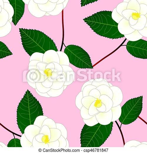 Fleur Rose Camelia Illustration Arriere Plan Vecteur Blanc