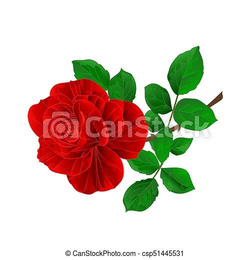 Fleur Rose Feuilles Vector Eps Fond Vendange Blanc Rouge