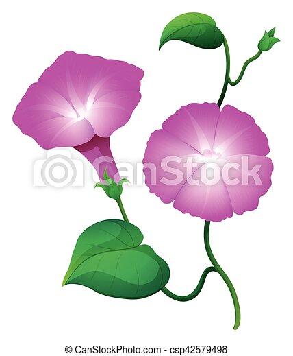 Fleur Rose Gloire Couleur Deux Matin