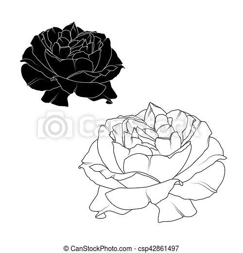 Fleur Rose Isolé Réaliste Noir Blanc Fleur