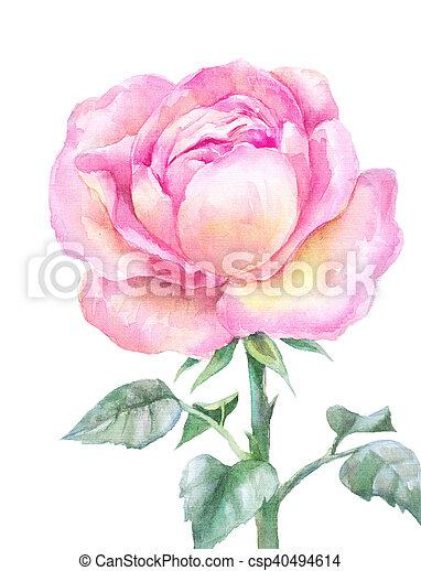 Fleur Rose Jardin Rose Isole Main Aquarelle Arriere Plan