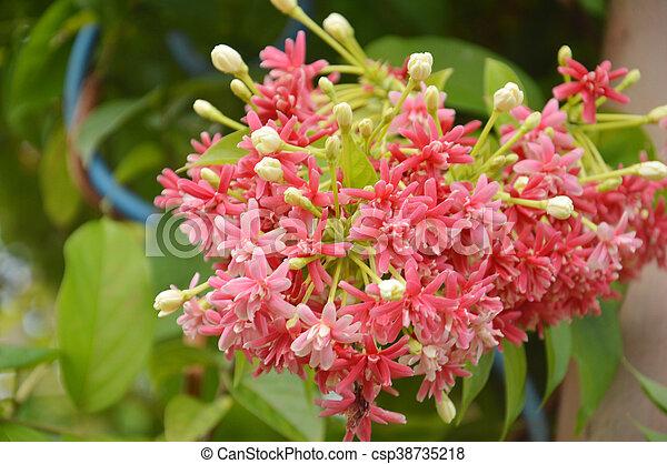 Fleur Rose Mexicain Chaine Liane Corail Vigne Amour Ou