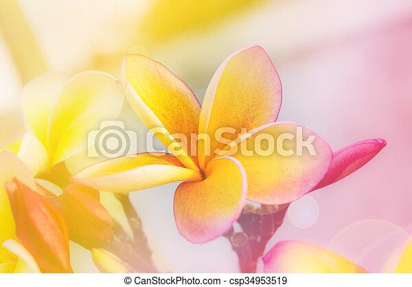 Fleur Rose Romantique Frangipanier Couleur Jaune Doux Humeur