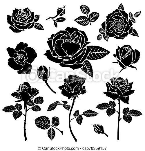 fleur, rose, silhouette, ensemble - csp78359157