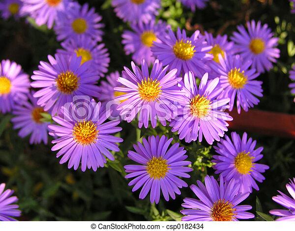 fleurs, 4 - csp0182434