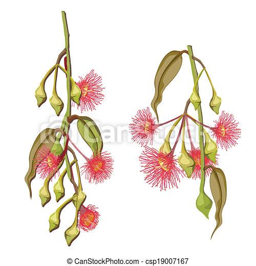 fleurs, arbre eucalyptus - csp19007167