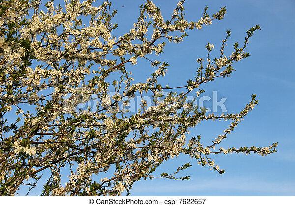 fleurs, arbres, beau, fleur - csp17622657