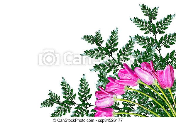 fleurs, arrière-plan., isolé, tulipes, printemps, blanc - csp34526177