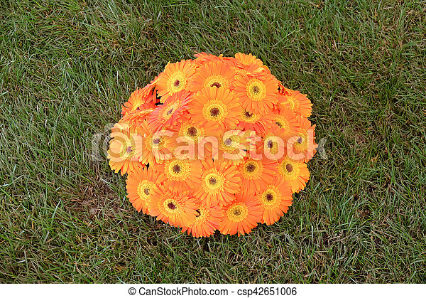 fleurs - csp42651006