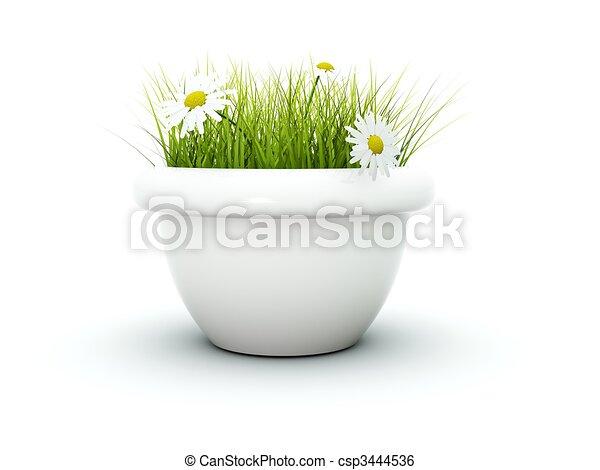 fleurs, blanc, herbe, isolé - csp3444536