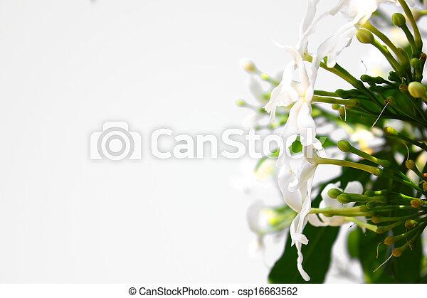 fleurs blanches - csp16663562