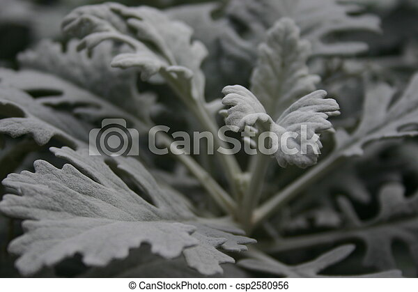 fleurs blanches - csp2580956