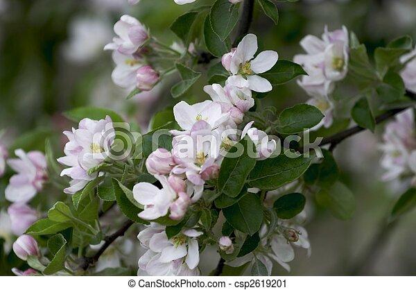 fleurs blanches - csp2619201