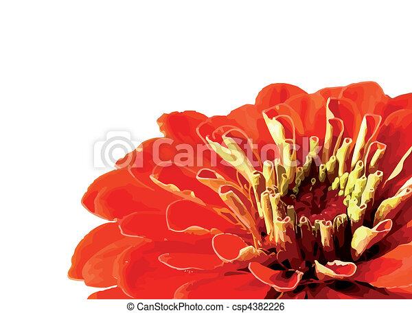 fleurs blanches, isolé, fond - csp4382226