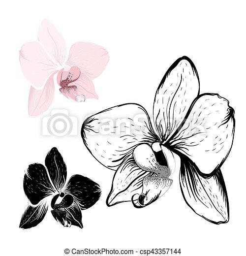 fleurs blanches isol fond orchid e rose l ments conception contour arri re plan set. Black Bedroom Furniture Sets. Home Design Ideas