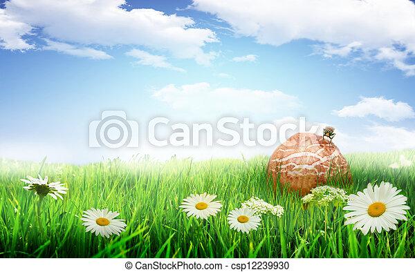 fleurs blanches, pré - csp12239930