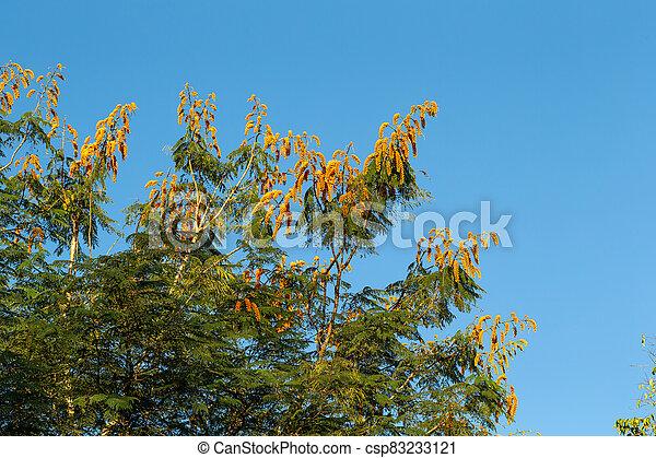 fleurs, ciel bleu, arbre, fond, orange - csp83233121