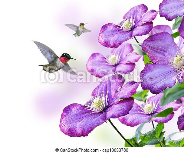 fleurs, colibris - csp10033780