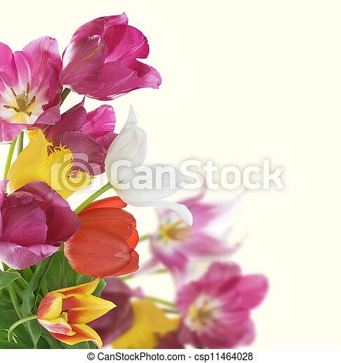 fleurs, conception, carte anniversaire, border. - csp11464028