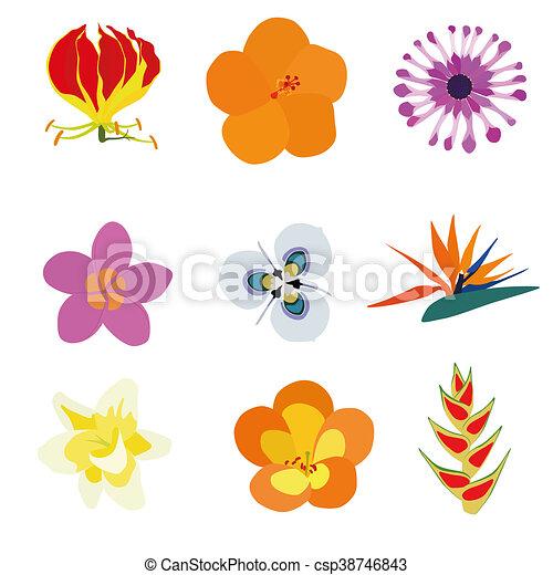 Fleurs exotiques exotique lis ensemble heliconia - Fleur d hibiscus dessin ...