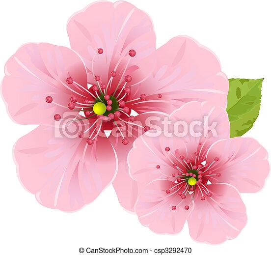 fleurs, fleur, cerise - csp3292470