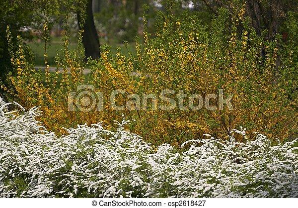 fleurs, fleurir - csp2618427