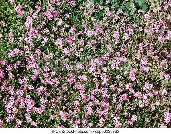 fleurs - csp50235762
