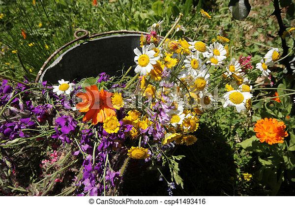 fleurs - csp41493416