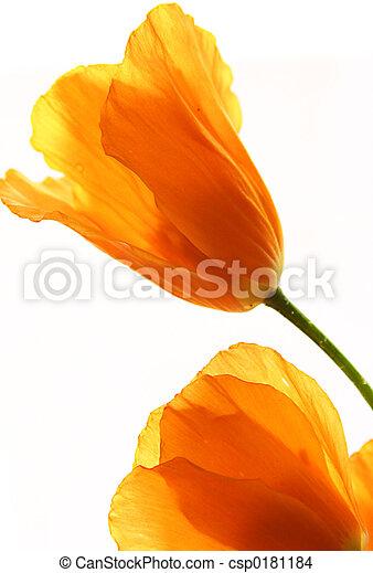 fleurs, jaune - csp0181184