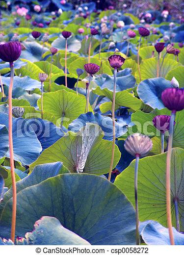 fleurs - csp0058272