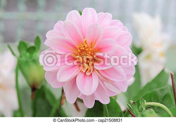 fleurs - csp21508831
