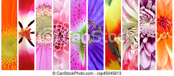 fleurs, plante, ensemble, collection - csp45045613