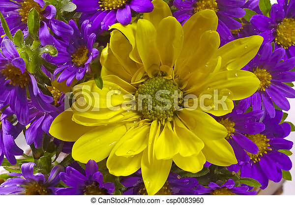fleurs pourpres, jaune - csp0083960