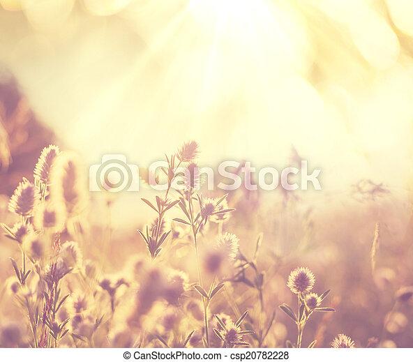 fleurs, pré - csp20782228