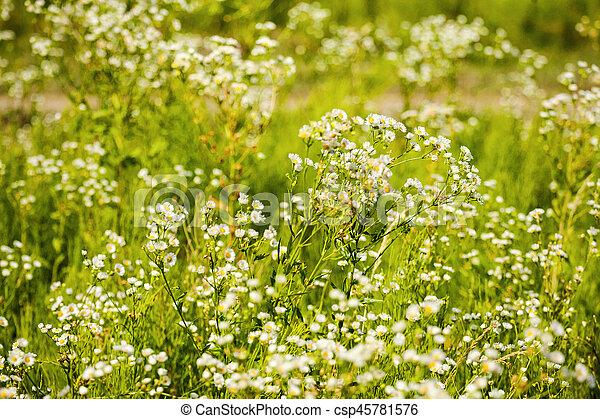 fleurs, printemps, printemps, matin, tôt, forêt verte, blanc, herbe - csp45781576