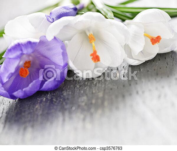 fleurs ressort, colchique - csp3576763